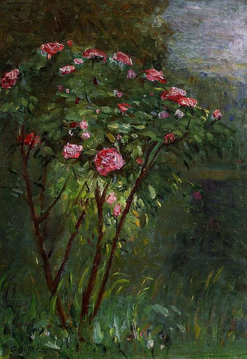 famous painting Rose Bush in Flower of Gustave Caillebotte
