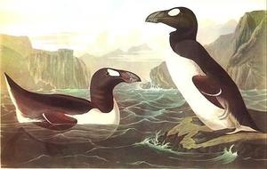 John James Audubon - Great Auk