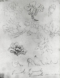 Thomas Cole - Sketch of Flowers