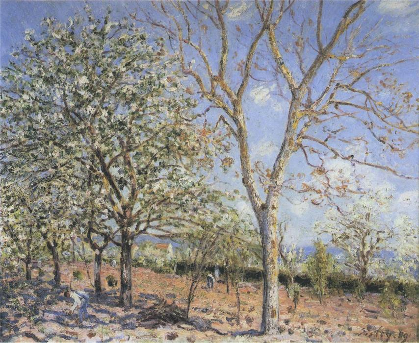 famous painting Trees in Bloom of Alfred Sisley
