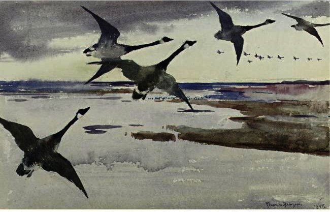 famous painting Canadian Geese of Frank Weston Benson