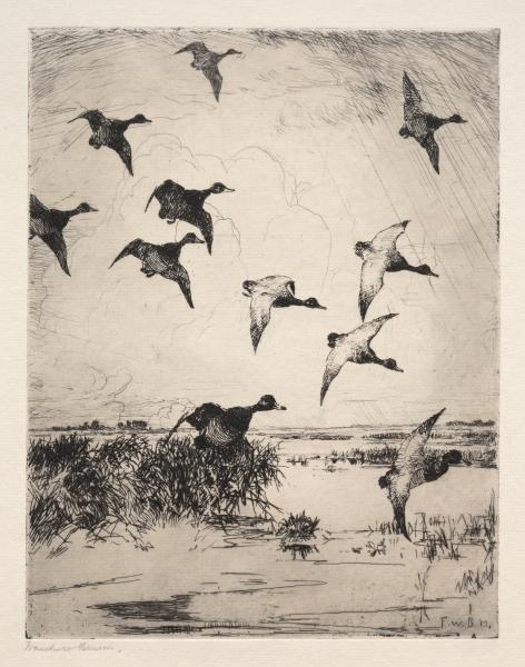 famous painting Flying Ducks of Frank Weston Benson