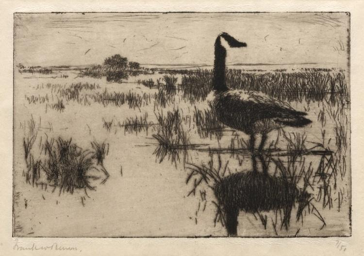 famous painting Lone Goose of Frank Weston Benson