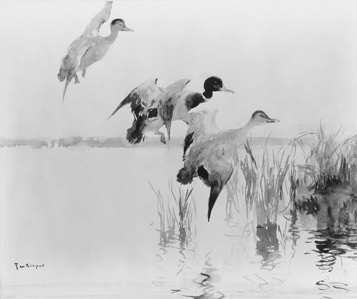 famous painting Mallards Alighting of Frank Weston Benson