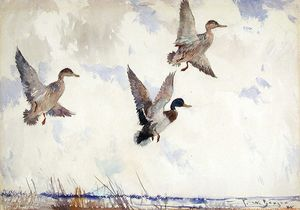 Frank Weston Benson - Rising Mallards