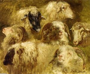 Rosa Bonheur - Heads of Ewes and Rams
