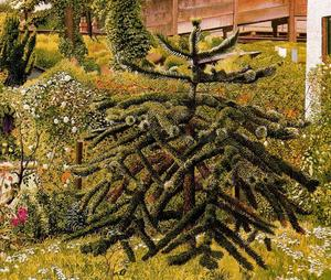 Stanley Spencer - The Monkey Puzzle. Whitehouse. Northern Ireland