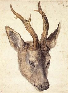Albrecht Durer - Head of the Stag