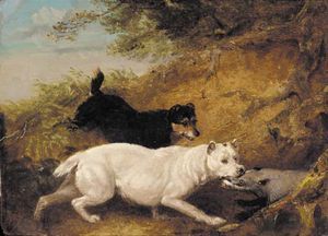 George Armfield (Smith) - Terriers Attacking A Badger