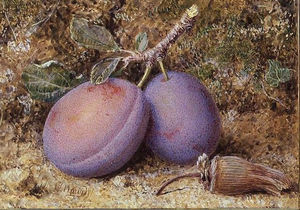 William Hough - Plums and a cob nut