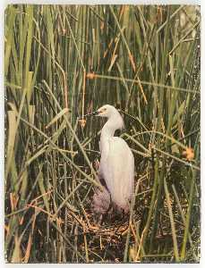 Joseph Cornell - Untitled (egret in nest with young)