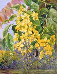 Marianne North - Foliage and Flowers and a Pod of the Amaltas or Indian Laburnum