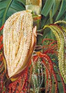 Marianne North - Flowers and Young Fruits of the Pinanga malaiana, Scheff