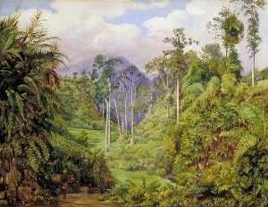 Marianne North - A Clearing in the Forest of Tji Boddas, Java, with Bank of Tree Ferns