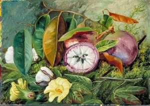 Marianne North - Foliage, Flowers and Seed Vessels of Cotton and Fruit of Star Apple, Jamaica