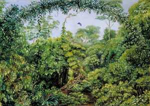 Marianne North - Butterflies' Road through Gongo Forest, Brazil