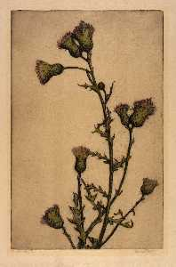 Bertha Evelyn Jaques - Canada Thistle