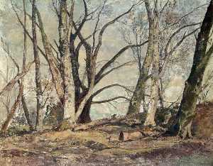 Oliver Hall - Houghton Forest, March Sunlight