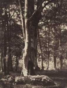 Gustave Le Gray - Forest of Fontainebleau