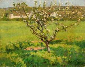 Domenico D. J Barnett - Apple Blossom
